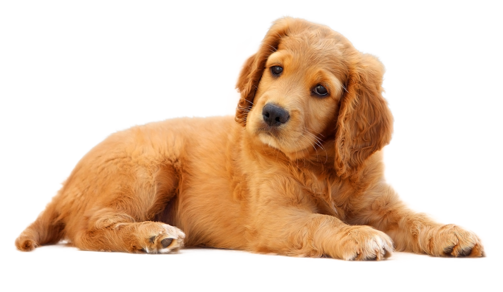Puppies Galore & More Jacksonville, Florida - Meet Your New