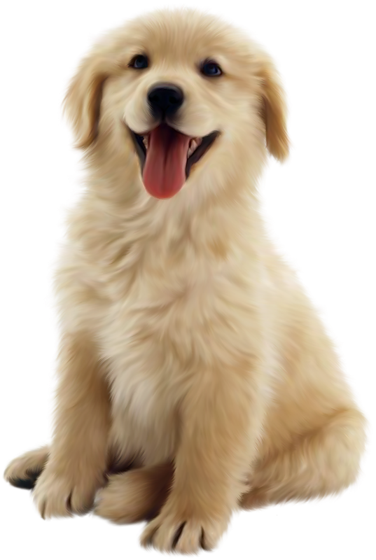 Puppies Galore & More Jacksonville, Florida - Meet Your New Best Friend